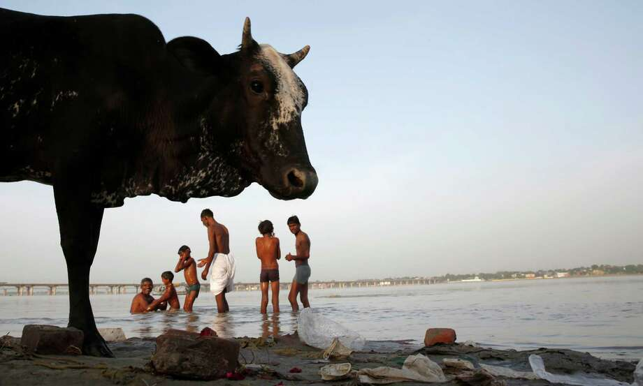 Hindu devotees take ritualistic dips, as a cow stands on the banks of the Sangam, the confluence of rivers Ganges, Yamuna, and mythical Saraswati in Allahabad, India. Photo: Rajesh Kumar Singh / Associated Press / AP