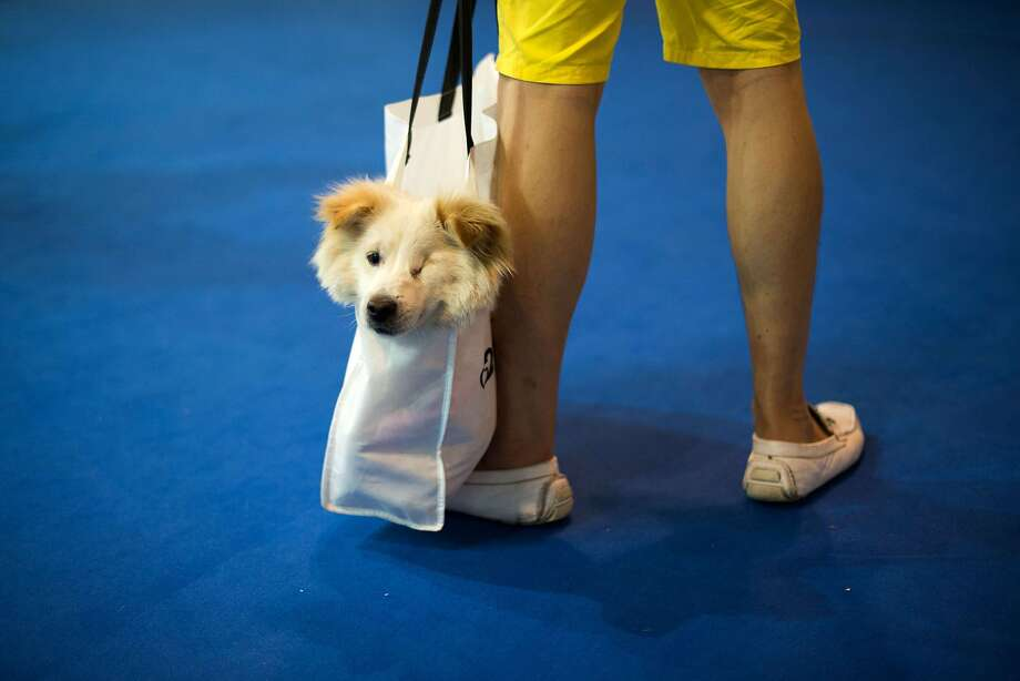 Doggy bag:When your pup is too tired to walk. (Pet Fair Asia 2014 in Shanghai.) Photo: Johannes Eisele, AFP/Getty Images
