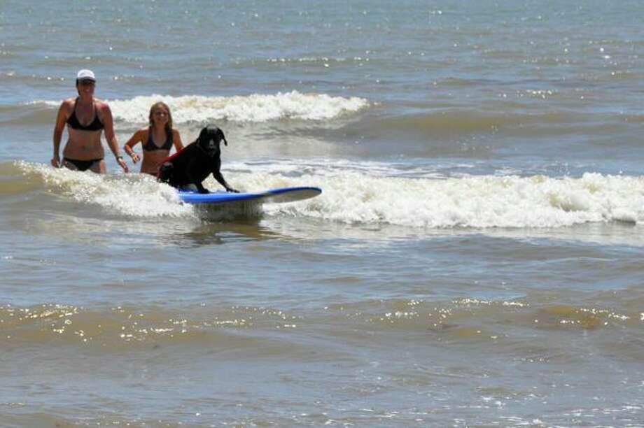 Fun in the Sun Photo: Galveston Island Humane Society