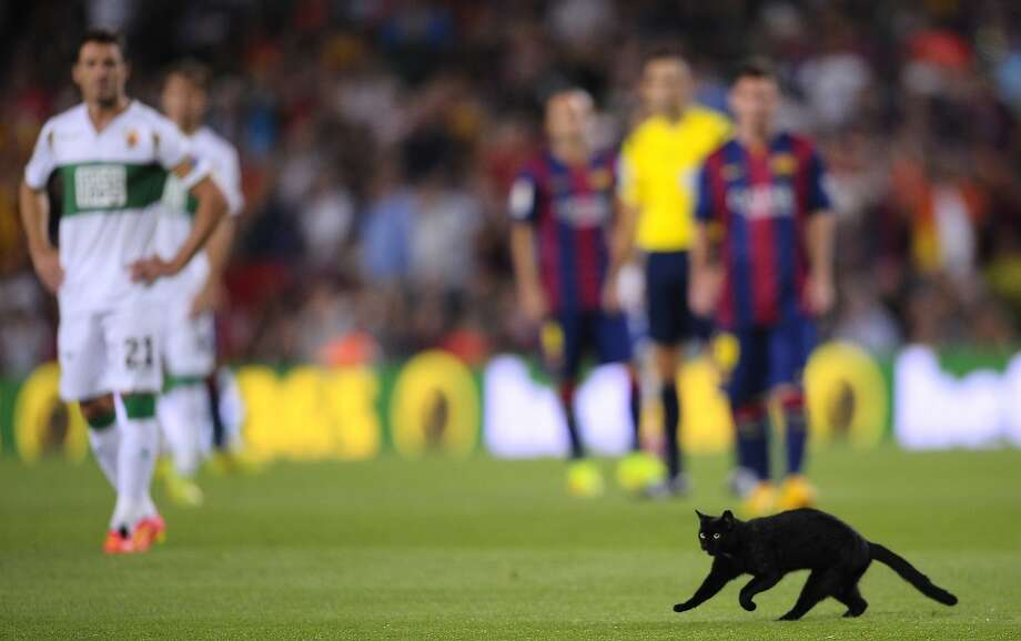 Pitch black: A black cat runs across the pitch during at Camp Nou stadium in Barcelona, bad luck 