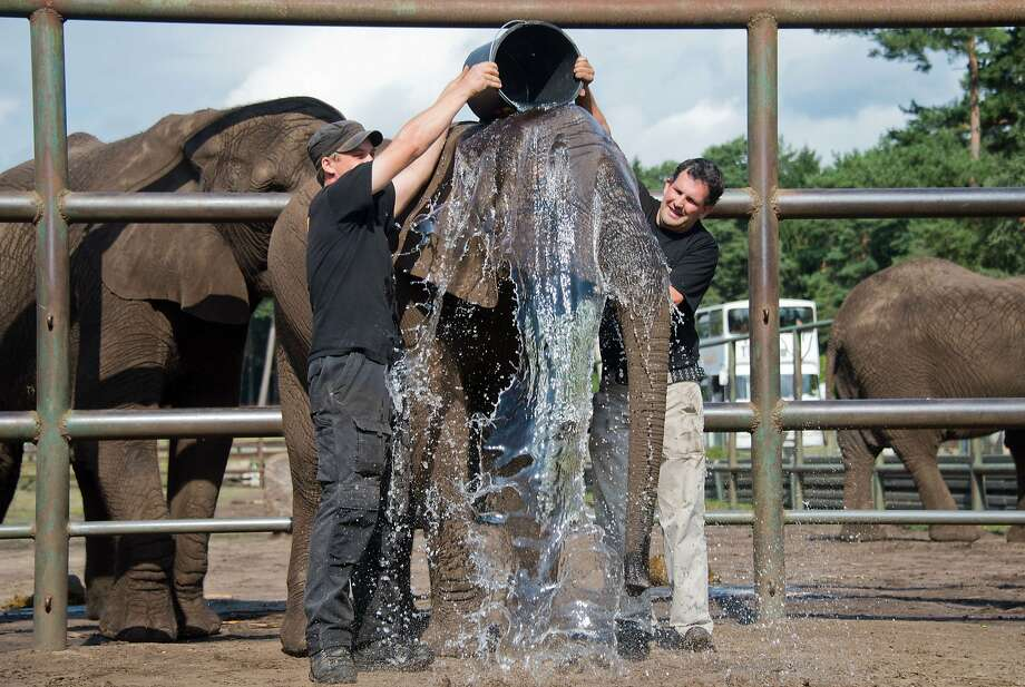 Whoa, Nelly!At Serengeti Park Hodenhagen in Hodenhagen, Germany, Nelly the elephant takes the Ice Bucket Challenge -- only without the ice -- to raise awareness and funds for Lou Gehrig's Disease (ALS). It's not clear who challenged Nelly. Photo: Julian Stratenschulte, AFP/Getty Images