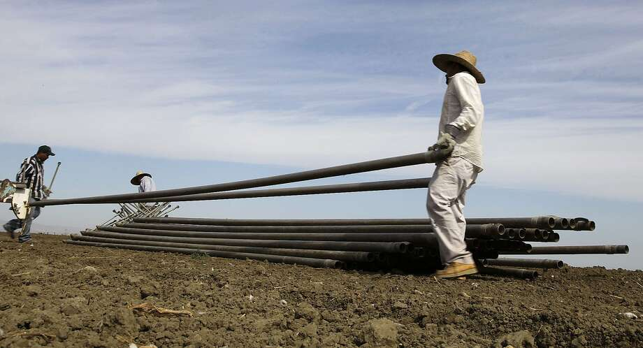 Workers move irrigation pipes from a field in the Westlands Water District, which appealed to the judge. Photo: Gosia Wozniacka, Associated Press