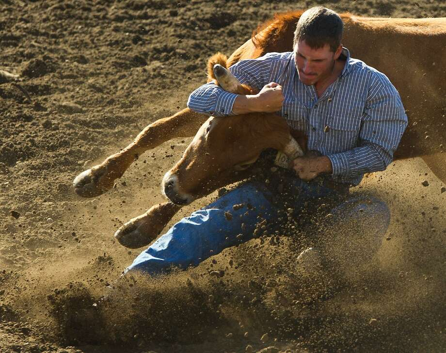 Cody McClearly wrestles a steer to the ground during the Frontier Days Rodeo Tuesday morning, Aug. 26, 2014, in Walla, Walla, Wash. (AP Photo/Walla Walla Union-Bulletin, Michael Lopez) Photo: Michael Lopez, Associated Press
