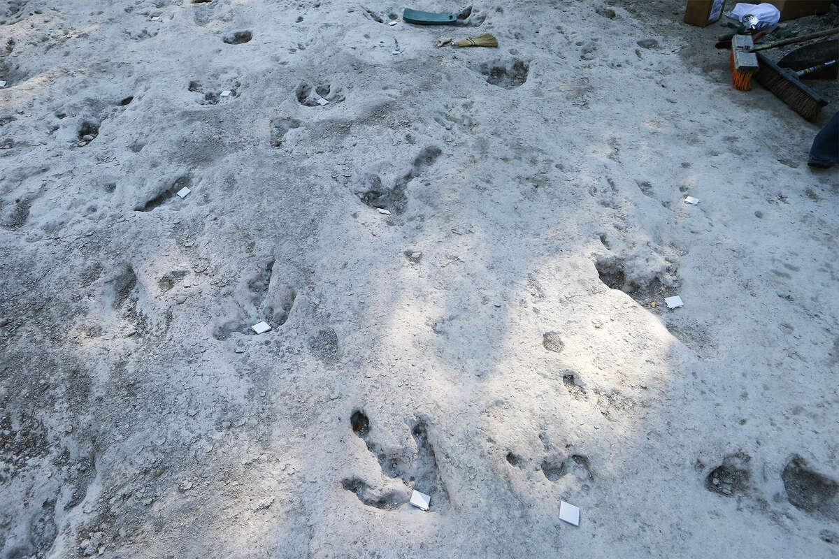 Dinosaur tracks on the upper trackway were marked with 2-inch square white tiles on the sixth day of work at Government Canyon State Natural Area on Thursday, Aug. 14, 2014. MARVIN PFEIFFER/ mpfeiffer@express-news.net