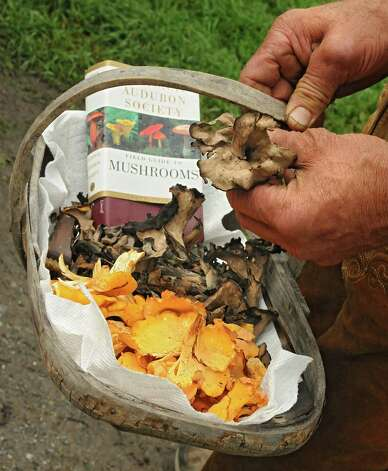 """Roger Boutard holds a basket containing trumpet, in his hand, and golden chanterelle mushrooms during a media preview for Behold! New Lebanon, a """"living museum of contemporary rural life"""" at the Abode Farm Thursday, Aug. 21, 2014 in New Lebanon, N.Y. (Lori Van Buren / Times Union) Photo: Lori Van Buren / 00028264A"""