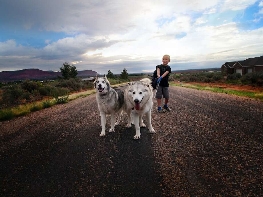 This Aug. 19, 2014 photo provided by Jill Williams shows kindergartner Harry Williams, 7, with his dogs Flora and Gandalf on his way to the bus stop on first day of school in Kanab, Utah. For millions of dogs across the country, summer is gone and so are their best buddies. Most dogs object for a while but eventually adjust to the new hours.  But millions of others will feel abandoned, panicky, sad and unable to cope as they look for ways to lash out. (AP Photo/Jill Williams) Photo: Jill Williams, Associated Press