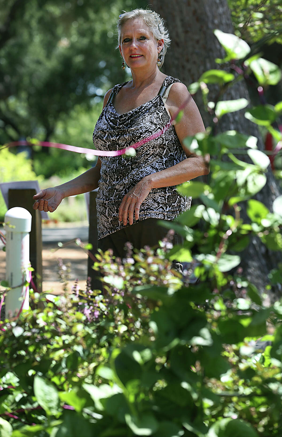 Patti Taylor, an organizer of the local TransFarming Meetup group, surveys a wicking bed garden that's growing Malabar spinach and basil. Taylor and the group, which is interested in sustainable gardening practices, planted the demo bed at Rainbow Gardens on Bandera Road.
