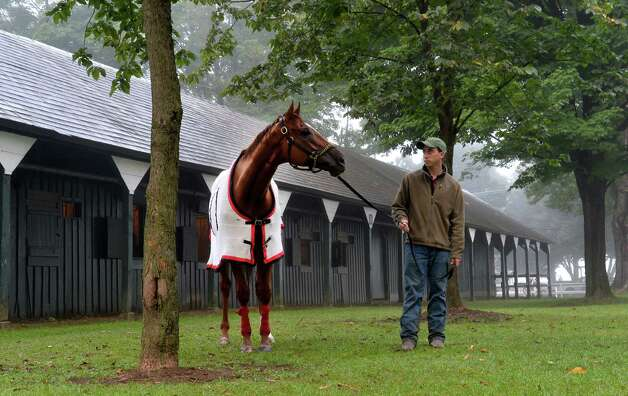 Reeve McGaughy holds two-time Horse of the Year Wise Dan as he lifts his head from grazing after his morning exercise to look out at the main track in the fog Sunday morning Aug. 24, 2014 at the Saratoga Race Course in Saratoga Springs, N.Y.  Wise Dan put in his final work before making the decision to make his next start in either the Bernard Baruch or the Woodbine Mile in Canada.  (Skip Dickstein/Times Union) Photo: SKIP DICKSTEIN