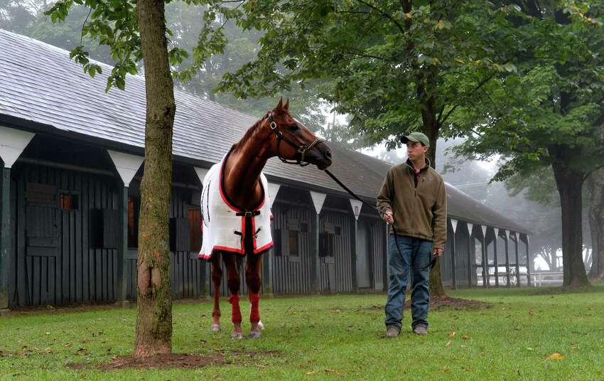 Reeve McGaughy holds two-time Horse of the Year Wise Dan as he lifts his head from grazing after his morning exercise to look out at the main track in the fog Sunday morning Aug. 24, 2014 at the Saratoga Race Course in Saratoga Springs, N.Y. Wise Dan put in his final work before making the decision to make his next start in either the Bernard Baruch or the Woodbine Mile in Canada. (Skip Dickstein/Times Union)