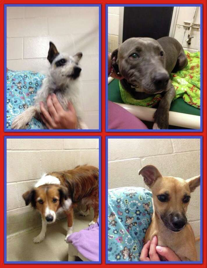These are the first four dogs that came in to the shelter. Photo: Napa County Animal Shelter