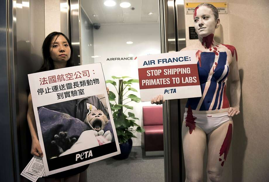 Stop the ape transports:PETA activists protest outside an Air France office in Hong Kong against what they say is the airline's practice of shipping primates to laboratories around the world. They say all other airlines have banned the practice. Photo: Alex Ogle, AFP/Getty Images