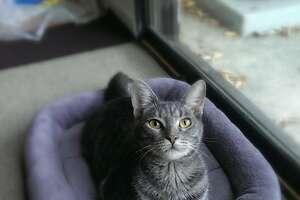 Sal and Brianna Mangano's cat Mr. Wobbles