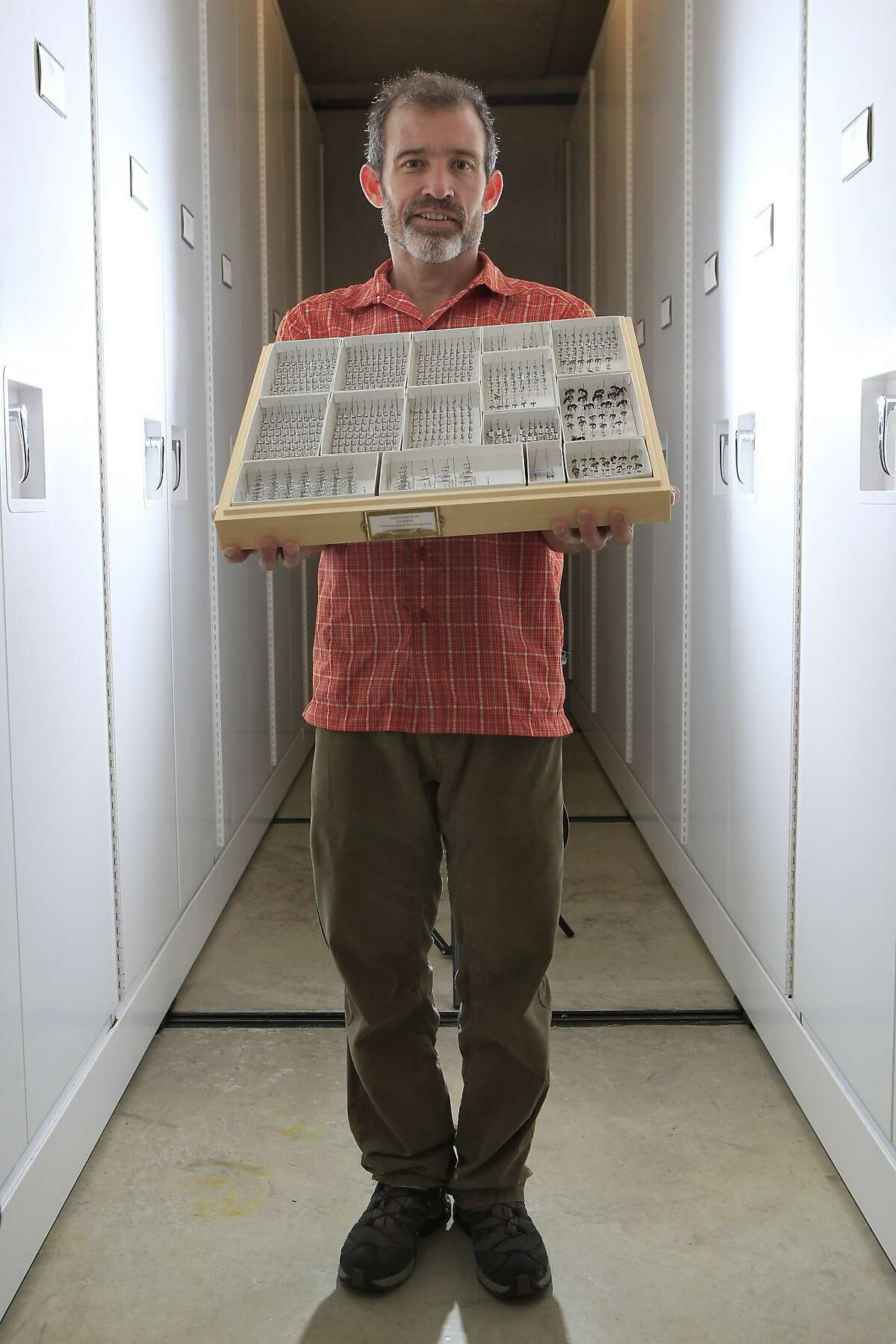 Entomologist Brian Fisher holds a board of ant specimens in the specimen room at the Academy of Sciences in San Francisco, CA, Thursday, August 28, 2014.