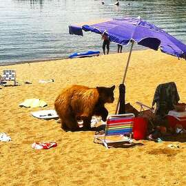 In July at Lake Tahoe, a bear broke up a party at Glenbrook Beach, looking for food.