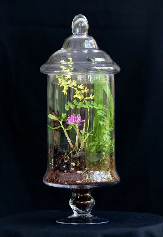 A terrarium, left, creates a self-contained environment perfect for displaying orchids. Another option is to submerge orchid stems in a vase, right, creating a dramatic presentation. Photo: J. Patric Schneider, Freelance / © 2014 Houston Chronicle