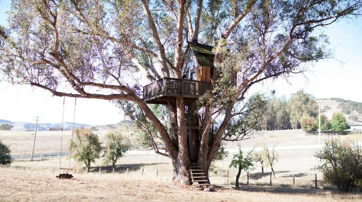 Tree house at Swallowtail Studios Petaluma; $175 per nightA eucalyptus tree trunk goes straight through the living room of this house, which rests 30 feet above the ground. There's a deck out front and a loft with a queen bed. The place accommodates two adults; children and pets are not permitted. Swallowtail Studios was a glass blowers cooperative in the 1970s.