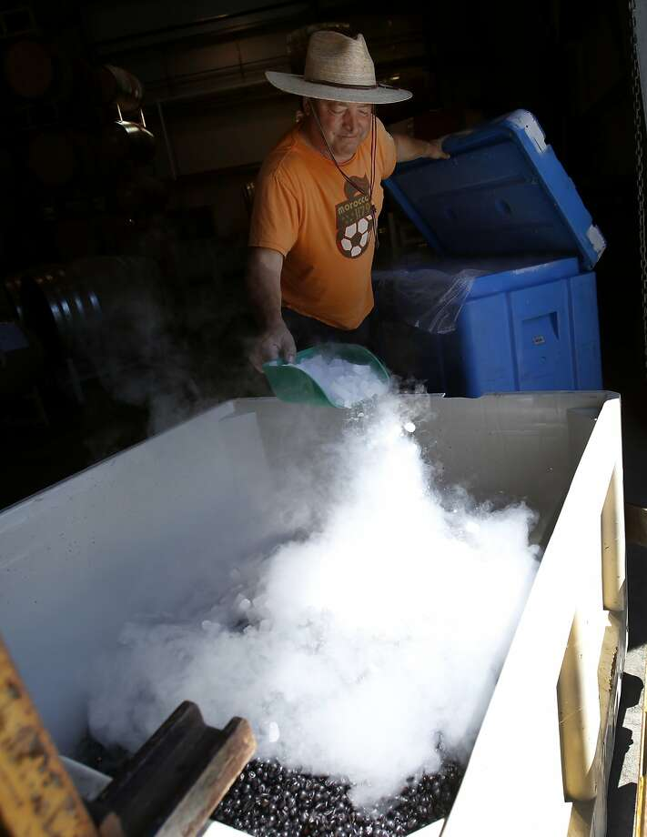 A winery worker at Cuvaison Estate Winery applies dry ice to some newly picked Pinot Noir grapes. Cuvaison, just miles from the epicenter of the quake, had many barrels topple. Photo: Brant Ward, San Francisco Chronicle