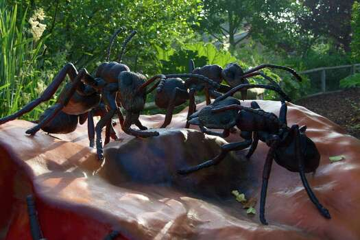 """Now through Oct. 26'Extreme Bugs!' extended at the zooThe Houston Zoo has extended the life of the exhibit """"Extreme Bugs!"""". The exhibit features 13 huge animatronic insects. The exhibit includes a ladybug with a 10-foot wingspan and a water-spraying beetle that is 60 times larger than the real thing. Visitors to """"Extreme Bugs!"""" walk through a backyard environment filled with interactive (turn a handle to light up a firefly) and realistic-looking insects. Among the creatures represented in the exhibit: a dragonfly, a red-tailed bumblebee, a praying mantis and a Mexican red knee tarantula (yikes!). 9 a.m.-7 p.m. daily; 6200 Hermann Park Drive; Tickets: $2.95 plus general admission of $15, $11 ages 2-11; houstonzoo.org. Photo: Courtesy Photo"""