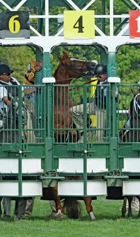 Two-time horse of the year Wise Dan becomes unruly in the starting gate before the 56th running of the Bernard Baruch which he won Saturday afternoon Aug. 30, 2014 at the Saratoga Race Course in Saratoga Springs, N.Y.     (Skip Dickstein/Times Union) Photo: SKIP DICKSTEIN