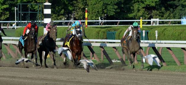 Palace pulls away from the field as sea gulls fly from the track to win the 35th running of The Forego Saturday afternoon Aug. 30, 2014 at the Saratoga Race Course in Saratoga Springs, N.Y.     (Skip Dickstein/Times Union) Photo: SKIP DICKSTEIN