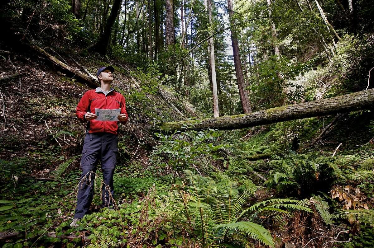 Peninsula Open Space Trust Director, Planning Development Gordon Clark surveys the San Vicente Redwoods area in Davenport.