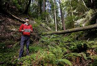 Peninsula Open Space Trust Director Gordon Clack along the lush Picnic Creek in the middle of the San Vincente Redwoods property as seen near Davenport, Calif., on Friday Aug. 29, 2014. 8,532 acres of land in the Santa Cruz mountains owned by the Cemex cement company have been purchased by a consortium of environmental groups and now is safe from any future development.
