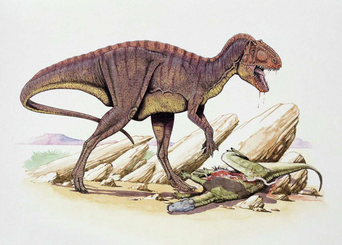 Contemporaries That makes them as old as the dinosaurs, but still here.