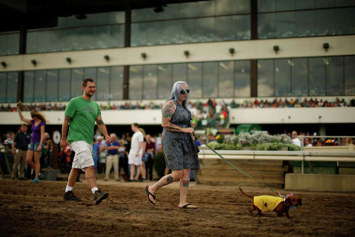 Jaquelyn and Josh Miller walk their dog, Muffin, onto the track for the Championship heat Monday, Sept. 1, 2014, at Canterbury Park, in Shakopee, Minn.