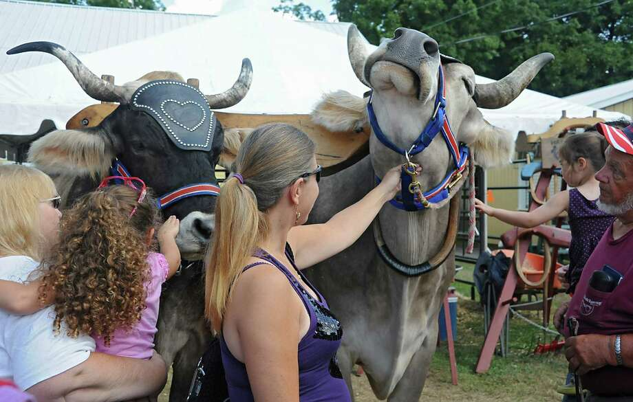 Oxen get petted and their chin rubbed at the Columbia County Fair on Monday, Sept. 1, 2014 in Chatham, N.Y.  (Lori Van Buren / Times Union) Photo: Lori Van Buren / 00028266A