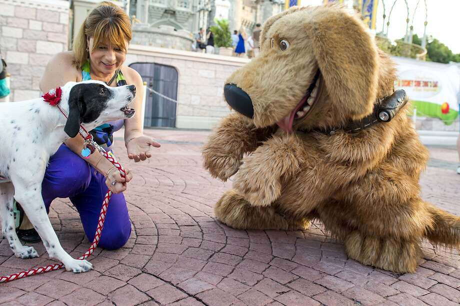 Imposter! Mejay Aguerre's pooch, Lily, doesn't know what to make of the giant canine character Dug at Walt Disney World Resort in Lake Buena Vista, Fla., so she decides to bark just to be on the safe side. Photo: Chloe Rice, Getty Images