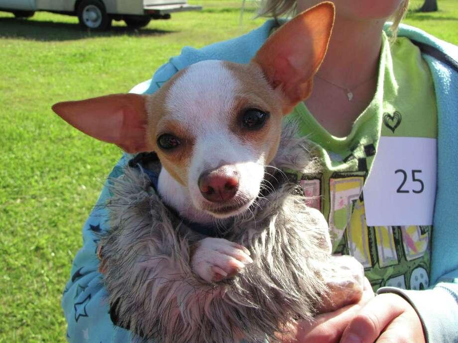 Contestant in last year's  doggy event in La Porte. Photo: Courtesy Photo