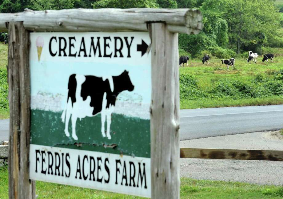 A bucolic scene as cows graze across the road from Ferris Acres Creamery in Newtown, Conn. on Friday, September 5, 2014. Photo: Cathy Zuraw / The News-Times