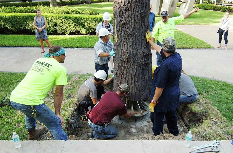 "Art handlers and riggers maneuver the two-ton bronze sculpture, ""Albero folgorato (Lightning Tree)"" by Giuseppe Penone, for installation at the Museum of Fine Arts, Houston. The 36-foot-tall sculpture was cast from an oak that had been struck by lightning. Photo: The Museum Of Fine Arts, Houston"
