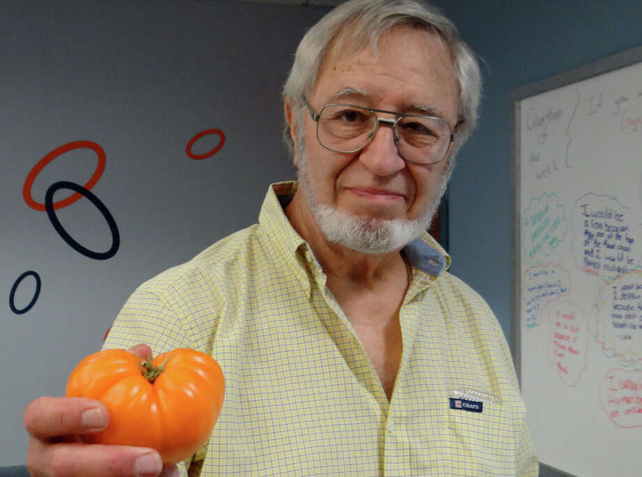 Larry Kaley with his home-grown Orange Oxheart tomato at the Fairfield Woods Branch Library's tomato celebration and tasting Saturday afternoon. Photo: Mike Lauterborn / Fairfield Citizen
