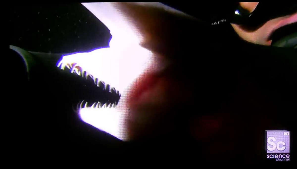 Der Kiefer des Goblinhais kommt wie ein zweiter Kopf heraus, um ahnungslose Mittagessen festzuhalten, die vorbeischwimmen.