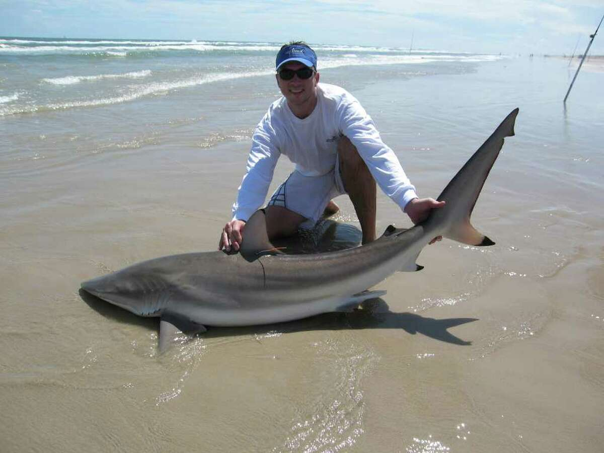 Species name: Carcharhinus brevipinnaCommon name: Spinner sharkNon-fatal attacks: 16Fatal attacks: 0