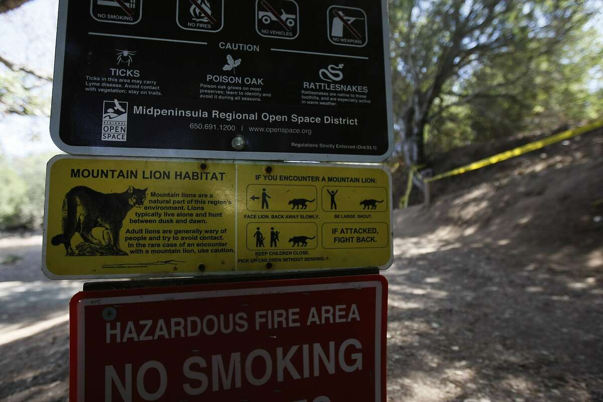 Signs warn hikers of residing mountain lions at the opening of a hiking trail at Picchetti Ranch Open Space Preserve near Cupertino where a 6-year-old boy was attacked by a mountain lion Sunday, September 7th, 2014
