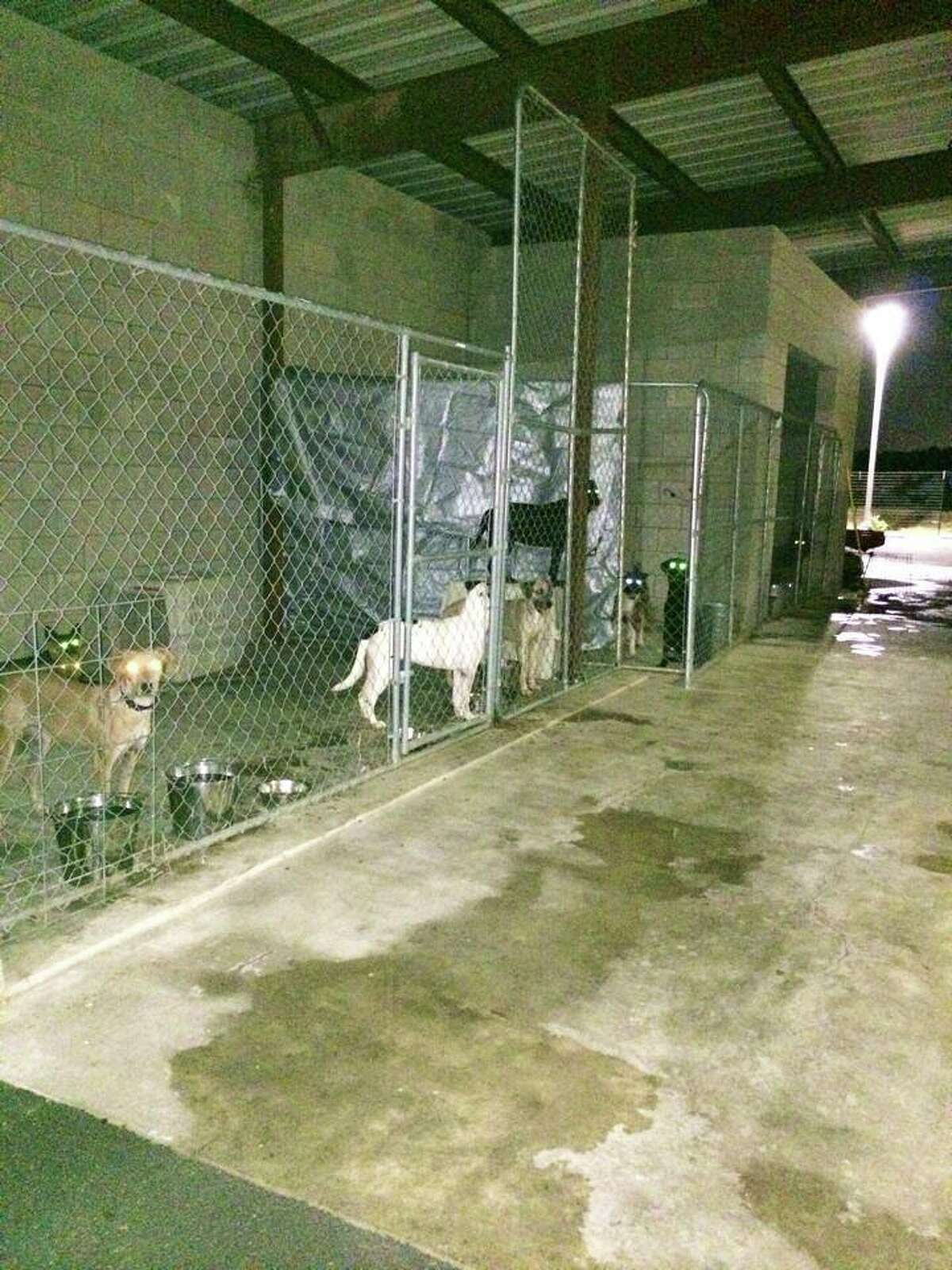 The Humane Society's healthy dogs are quarantined in outside dog kennels, where they will remain for the 30-day quarantine period. The dogs will be available for adoption after the quarantine period is over.