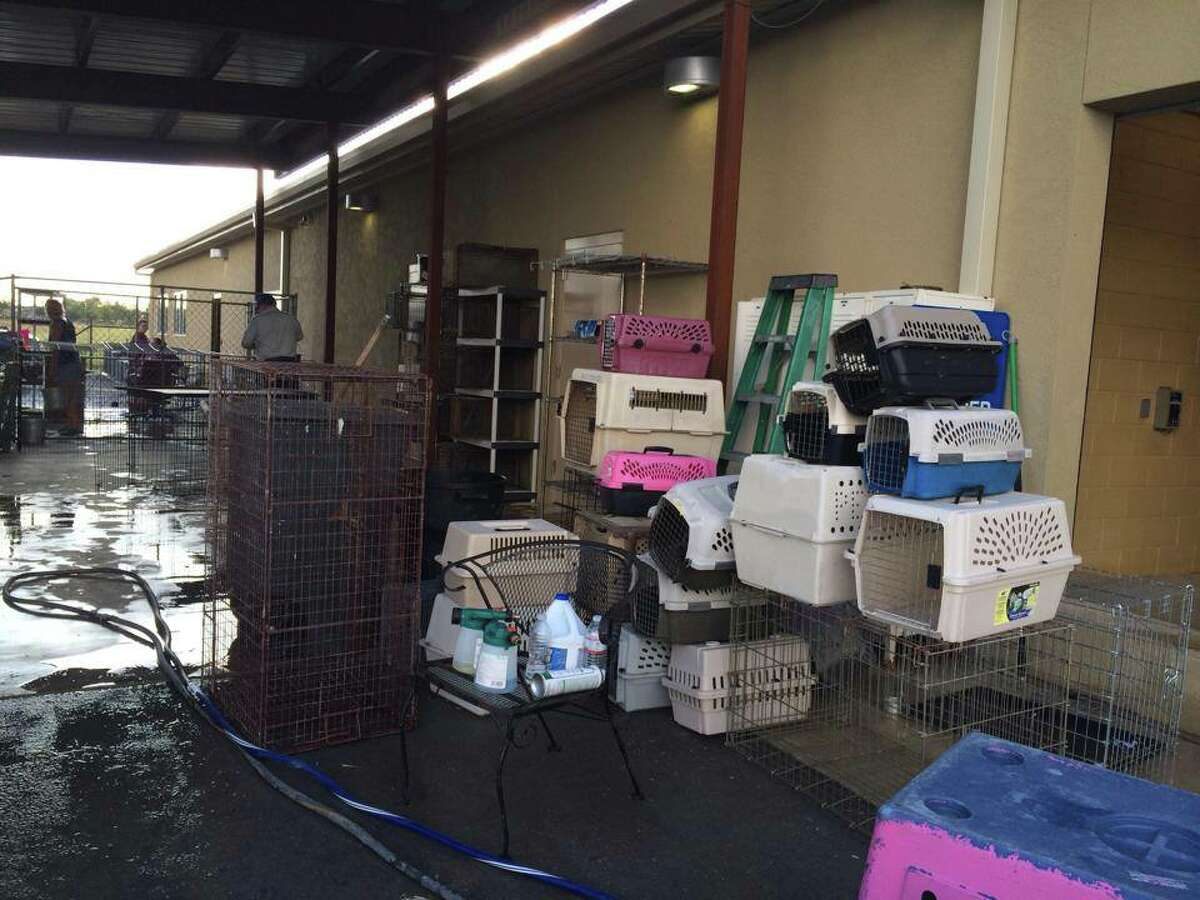The New Braunfels Humane Society confirmed several cases of canine distemper at their shelter, resulting in an adoption halt and euthanization of most dogs.