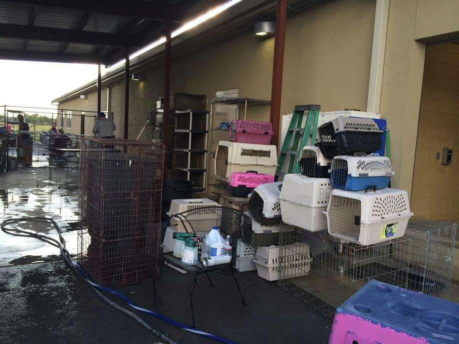The New Braunfels Humane Society confirmed several cases of canine distemper at their shelter, resulting in an adoption halt and euthanization of most dogs. Photo: Humane Society Of The New Braunfels Area