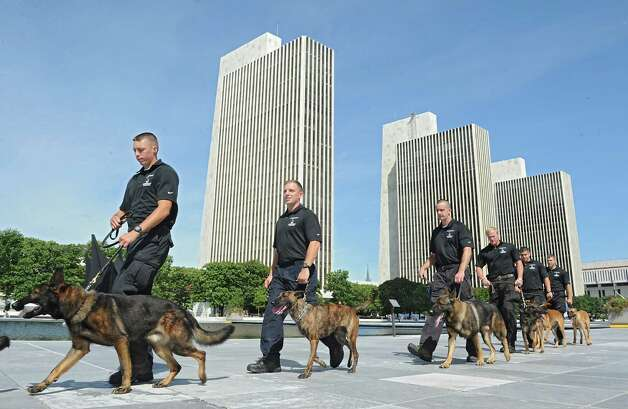 More than two dozen New York State Trooper handlers and their canines from across New York State participate in a training exercise at the Empire State Plaza on Wednesday, Sept. 10, 2014, in Albany, N.Y. (Lori Van Buren / Times Union) Photo: Lori Van Buren / 00028543A