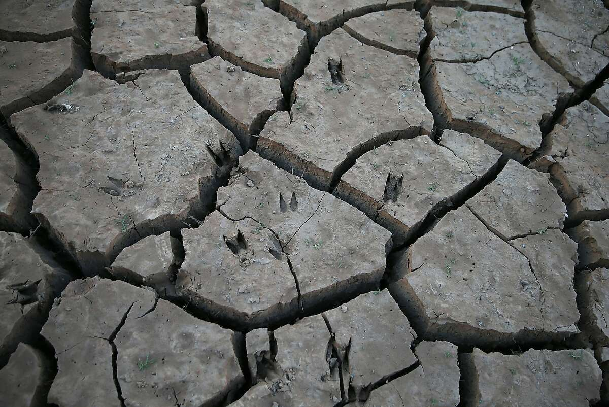 LAKEHEAD, CA - AUGUST 30: Animal prints are visible in dry cracked earth on the banks of Shasta Lake on August 30, 2014 in Lakehead, California. As the severe drought in California continues for a third straight year, water levels in the State's lakes and reservoirs is reaching historic lows. Shasta Lake is currently near 30 percent of its total capacity, the lowest it has been since 1977. (Photo by Justin Sullivan/Getty Images)