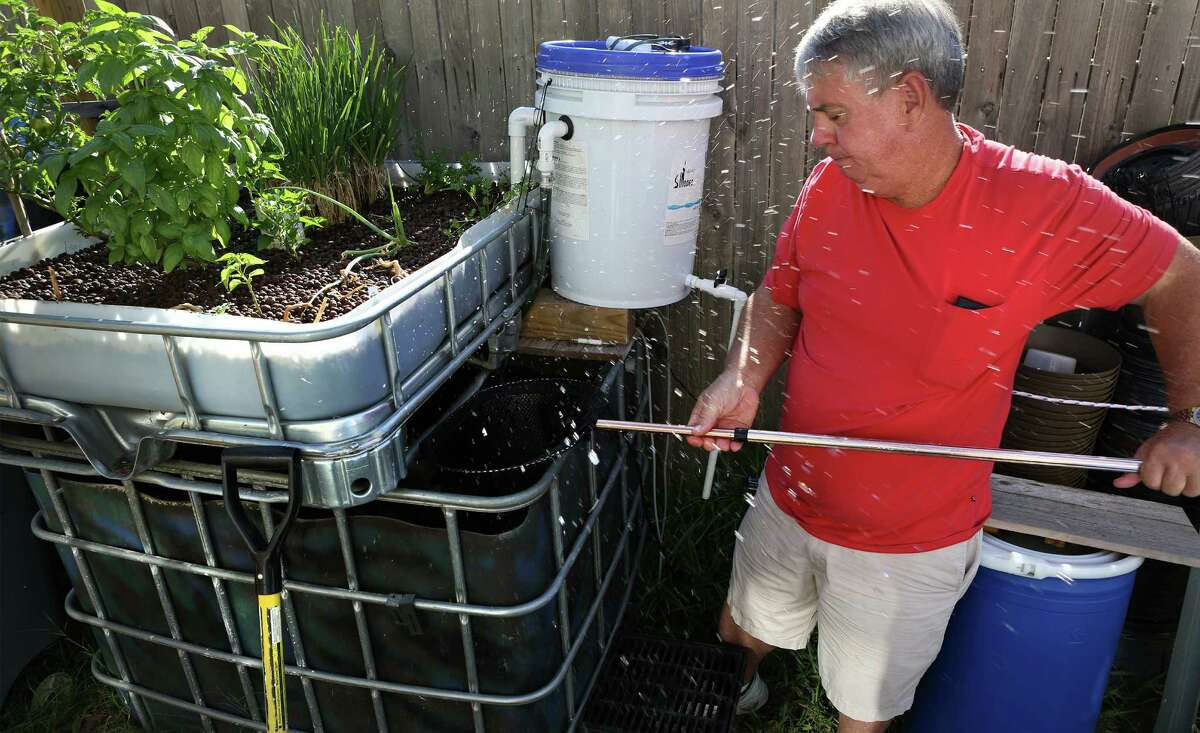 Water splashes around Leslie Adams as he nets catfish from a tank on one of his aquaponic gardens at his home in New Braunfels. Adams said some of the fish are almost big enough to harvest. Monday September 8, 2014