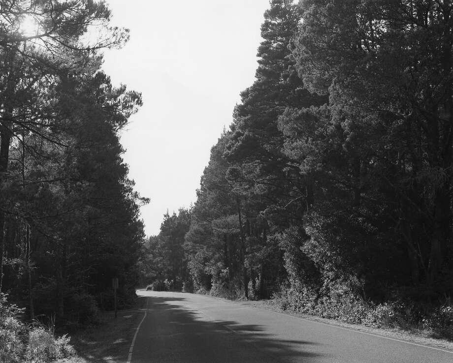 """A Road Through Shore Pine"" (2013) by Robert Adams is part of his new series from trips along Oregon's forested highways. Photo: Robert Adams, Fraenkel Gallery, S.f."