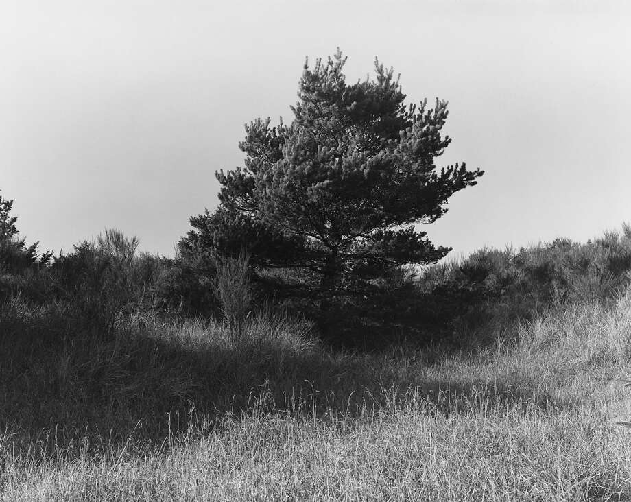 "Robert Adams photographed the 68 images in ""A Road Through Shore Pine"" at Nehalem Bay State Park in Oregon. Photo: Robert Adams, Fraenkel Gallery"