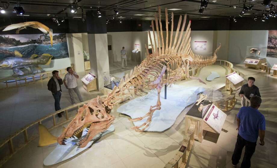 A 50-foot life-size model of Spinosaurus went on display Thursday at the National Geographic Society in Washington. With its webbed feet, the dinosaur spent most of its time in the water. Photo: Associated Press / AP