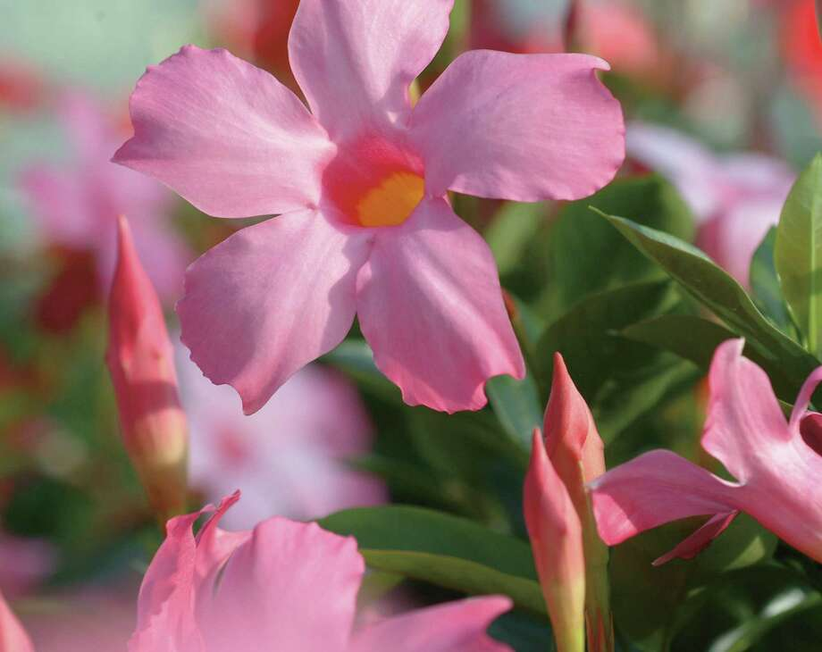 Heat loving plants houston chronicle Plants that love sun and heat