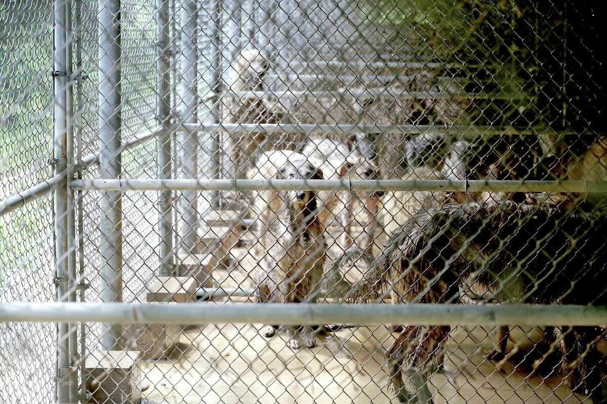 SPCA workers removed about 100 animals from a home in Santa Fe on Friday.