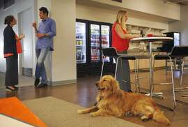 Lauren Hoe, 29, right, works in the cafe area as her dog Rupert keeps her company while co-workers Julia Taylor, 34, left, and Rob Mishev, 36, chat at Eventbrite's headquarters Sept. 12, 2014 in San Francisco, Calif.