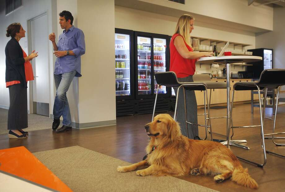 Lauren Hoe's dog Rupert keeps her company at Eventbrite headquarters as Julia Taylor and Rob Mishev chat nearby. Photo: Leah Millis, The Chronicle